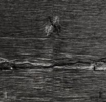 träkornstruktur