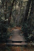 brun träbrygga mellan träd under dagtid foto