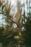 minimalistiskt grönt blad med en solstråle foto