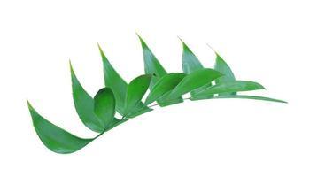 grönt blad isolerad på vit bakgrund foto