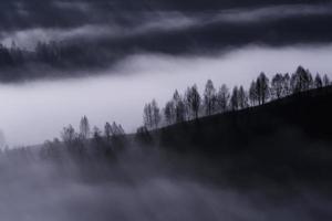 träd i en sluttning under dimmigt väder