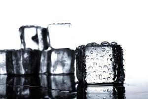 isbitar med vattendroppar