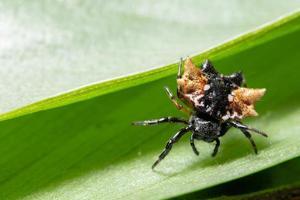 spindel på ett blad, makro foto