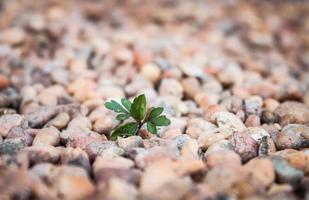 växter växer ut ur stenar foto