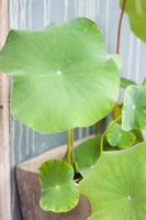 närbild av en grön växt mot en vägg