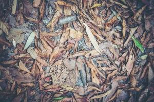 torkade löv på marken foto