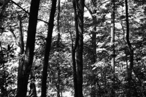 gråskalefoto av träd under dagtid foto