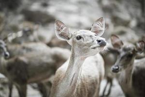 närbild av hjortflock
