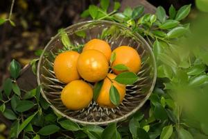 en korg med färska apelsiner i naturen