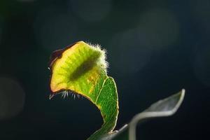 larv på ett blad