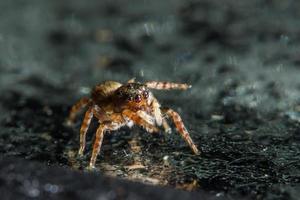 spindel på glasytan