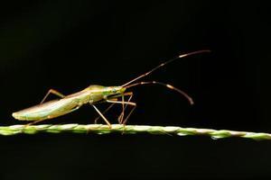 insekt på ett blad foto