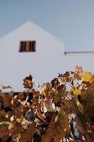 bruna växtblad foto