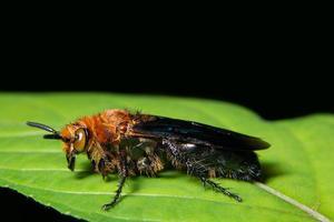 insekt på en växt foto