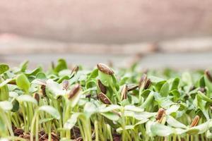 närbild av babyväxter foto