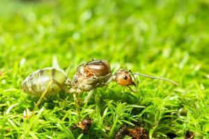 grön myra i gräset