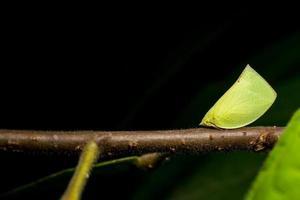 grön fjäril på ett träd foto