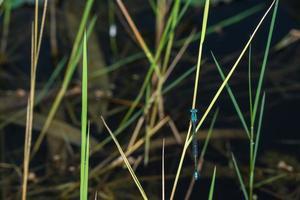 zygoptera på en växt foto
