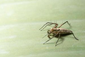 brun spindel på ett blad foto
