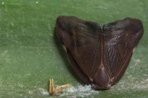 insekt på ett blad