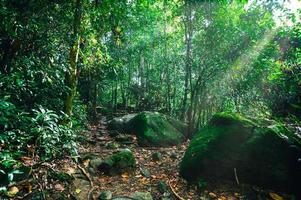 frodig tropisk skogsvegetation