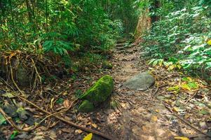 frodig skogsvegetation