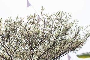 buske på en ljus dag