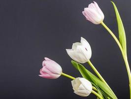 rosa tulpaner på en svart bakgrund foto