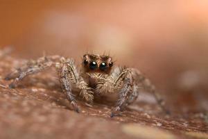 spindel på våt yta foto