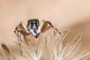 brun spindel på en blomma foto