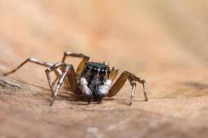 brun spindel på ett torrt blad foto