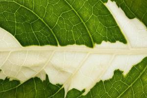 blad bakgrund, närbild foto
