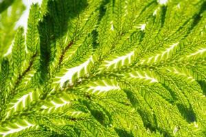 grönt blad bakgrund, närbild