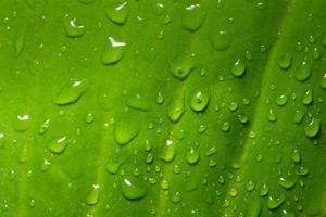 grönt blad bakgrund