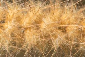 vildblomma, närbildfoto