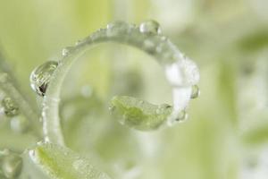 vattendroppar på en växt foto