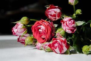 röda och vita rosor