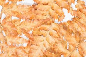 torr blad bakgrund
