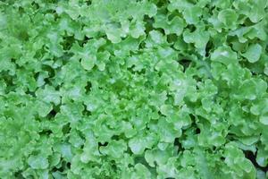 massa gröna blad
