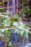 druvor med ett vattenfall foto