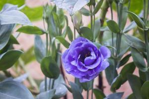 lila blomma utanför foto