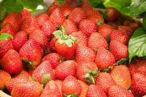 massa jordgubbar foto