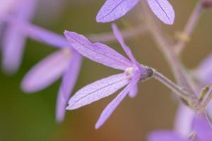 blomma närbild bakgrund