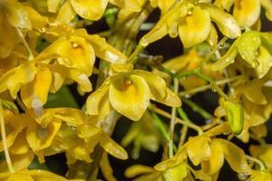 gula blommor, närbildfoto