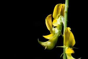 gul blomma, närbildfoto