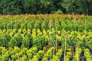 vy av växter som växer i ett fält foto