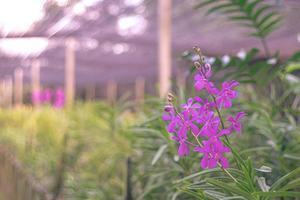 lila blommor i en trädgård