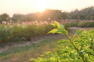 närbild av en grönbladad växt i en trädgård foto