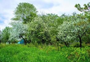 drummondville, quebec, kanada, 22 maj 2017 - äppelträden blommar foto