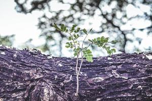 nya träd växer foto